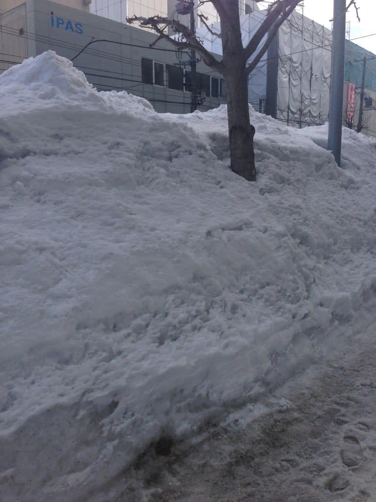豪雪の成果
