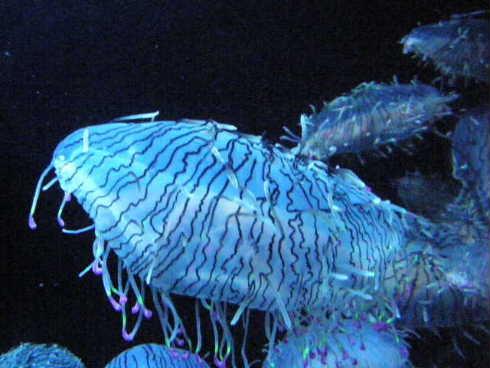 鶴岡市加茂水族館1 クラゲだらけ - 気ままなZOO