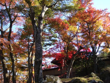 紅葉の苔庭