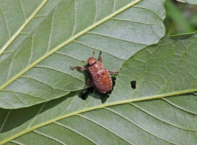 害虫 芝生 芝生の害虫にはどんなのがいる?駆除方法は? |