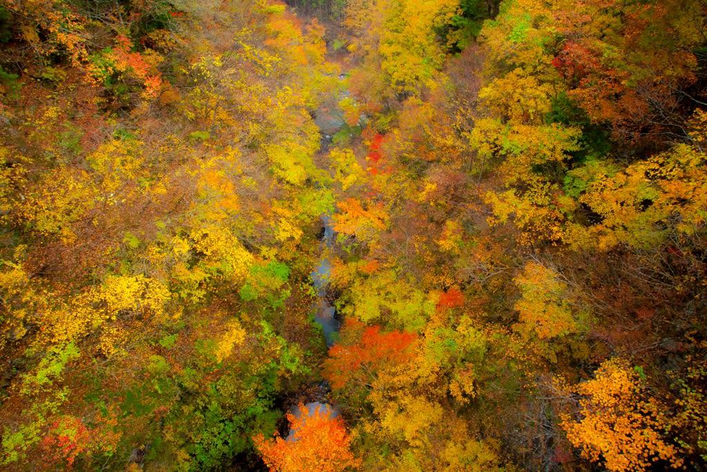 日原渓谷の紅葉