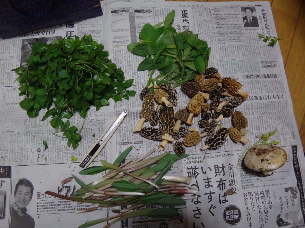 アミガサタケ