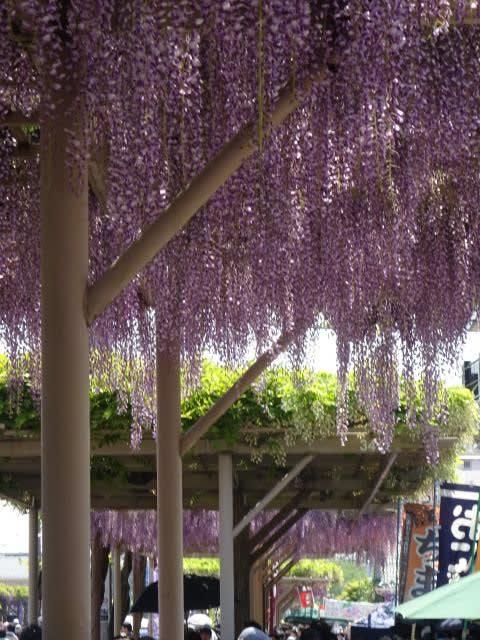 紫雲竜吉之助 - JapaneseClass.jp