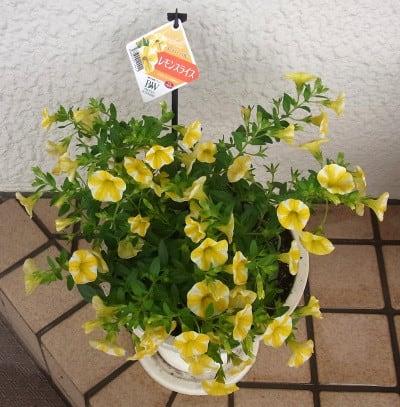 寄せ植え鉢-C