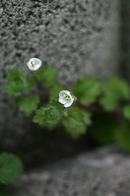 Img_7244blog