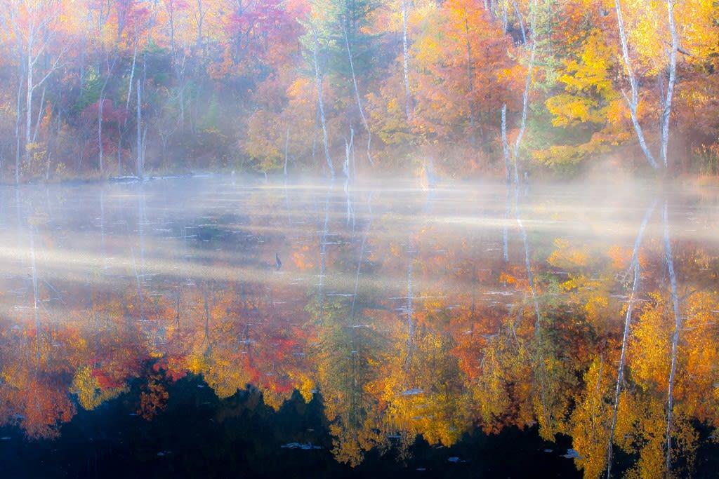まいめの池/紅葉の写真