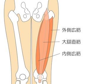 「大腿四頭筋 イラスト」の画像検索結果