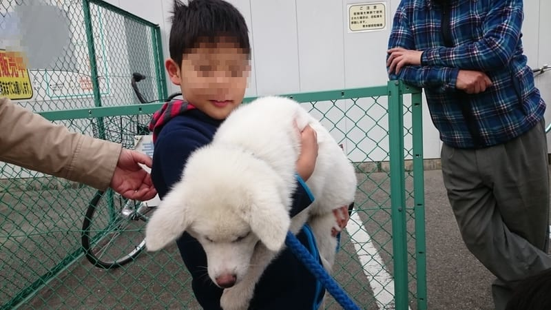 秋田 犬 こうすけ