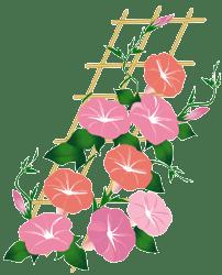 Asagao3
