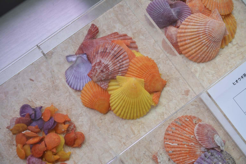 ラブユー ヒオウギ ブログ  ☆美しい海の環境を守り次世代を担う子供達に引き継ぐために!
