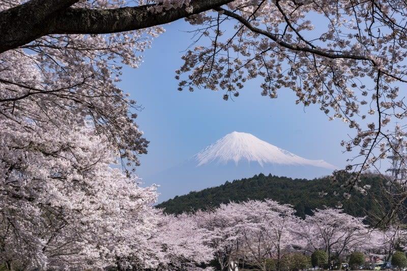 富士山と桜 静岡県 - 初心者の写...