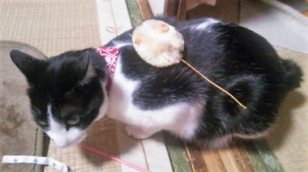 猫 ホウ 酸 団子