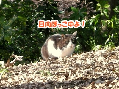 https://blogimg.goo.ne.jp/user_image/48/1c/34b5b22dd97dd41356c2be5b64f4355d.jpg