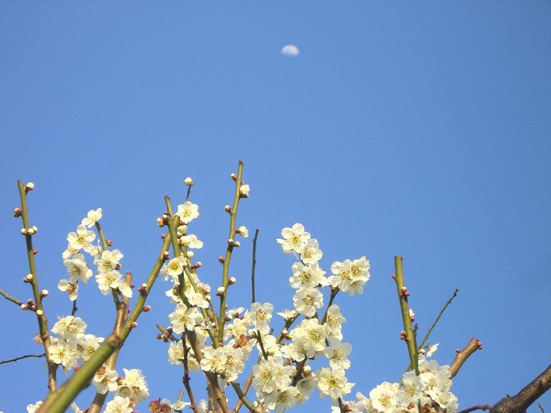 真っ青な空に白い月がロマンチックです