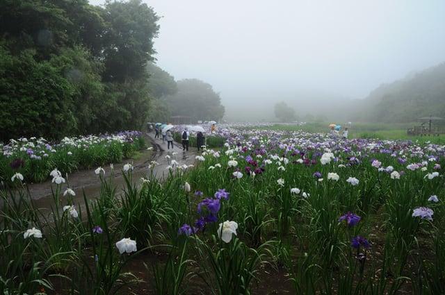 「みんなの花図鑑」のブログ記事一覧-想い出