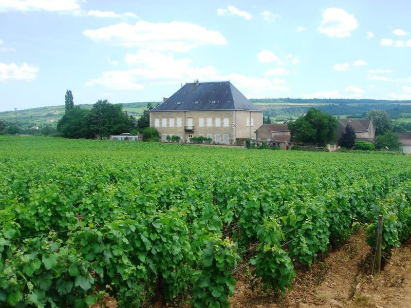 Chateauetvigne