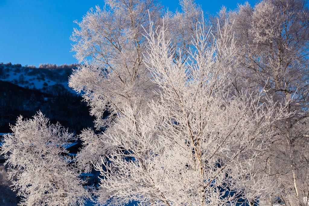 白樺湖の霧氷