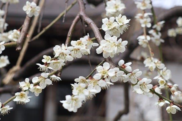春を感じるね~♪