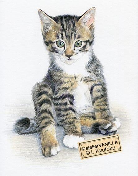 子猫のイラスト 色鉛筆イラスト Atelier Vanilla Blog