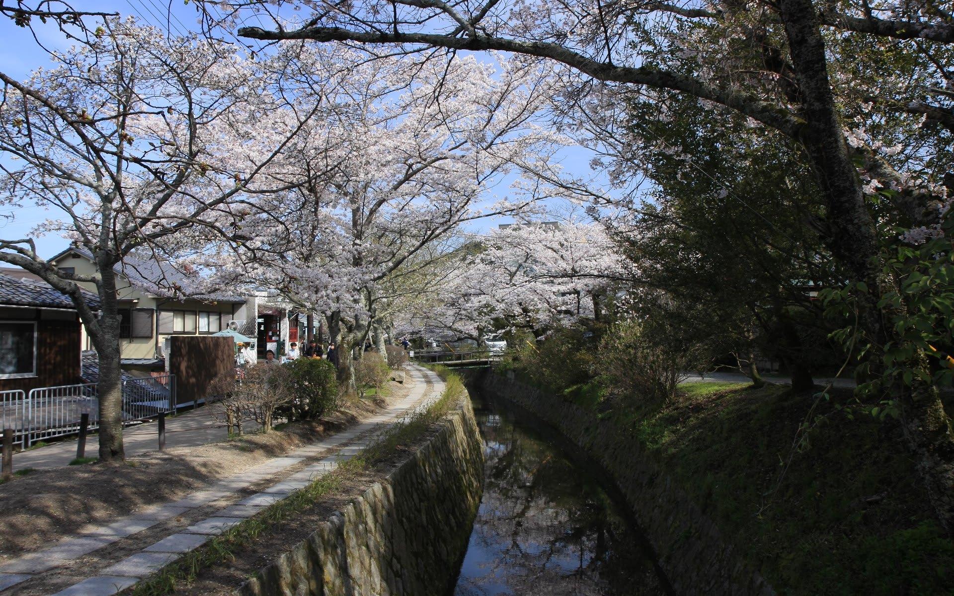 哲学の道 桜の壁紙その2 計34枚 壁紙 日々駄文