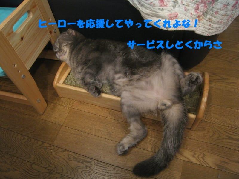 Photo_243