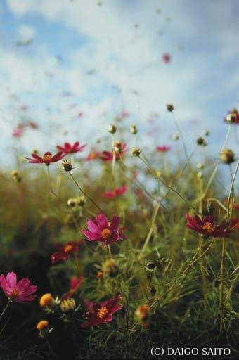 雑多な中に咲く