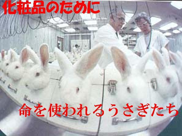 化粧品の動物実験をなくそう!キ...