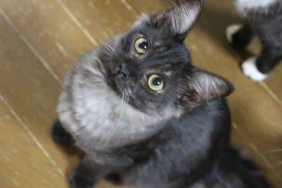 猫の登録と助成金制度