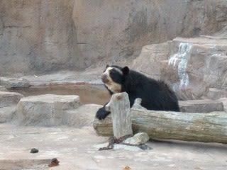 クマが肥満で悩んでます 動物園のヒミツ教えます (MF comic essay)