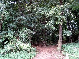 ふ~む・・・「この木の名前?」なんて、高木だから見上げても葉っぱの形が良くわからん。幹で判断するしかないのかな。。。わかるわけ無いですよね。う~む・・・