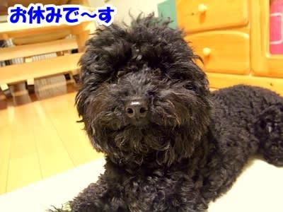 https://blogimg.goo.ne.jp/user_image/4a/b2/c439645f2eabeabc5576983d9ee6d67f.jpg