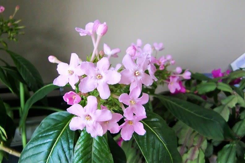 花を愛でる