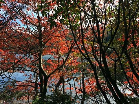 白駒池 紅葉