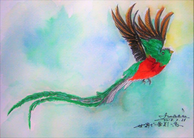 世界で一番美しい鳥・ケツァール~ , タカちゃんの絵日記