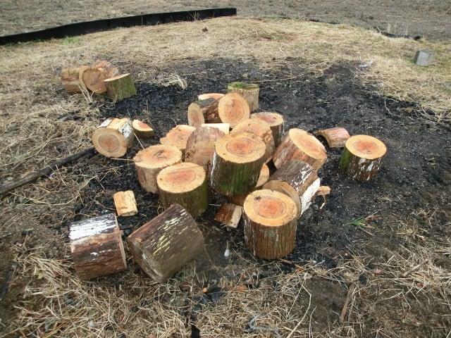 杉の切り株