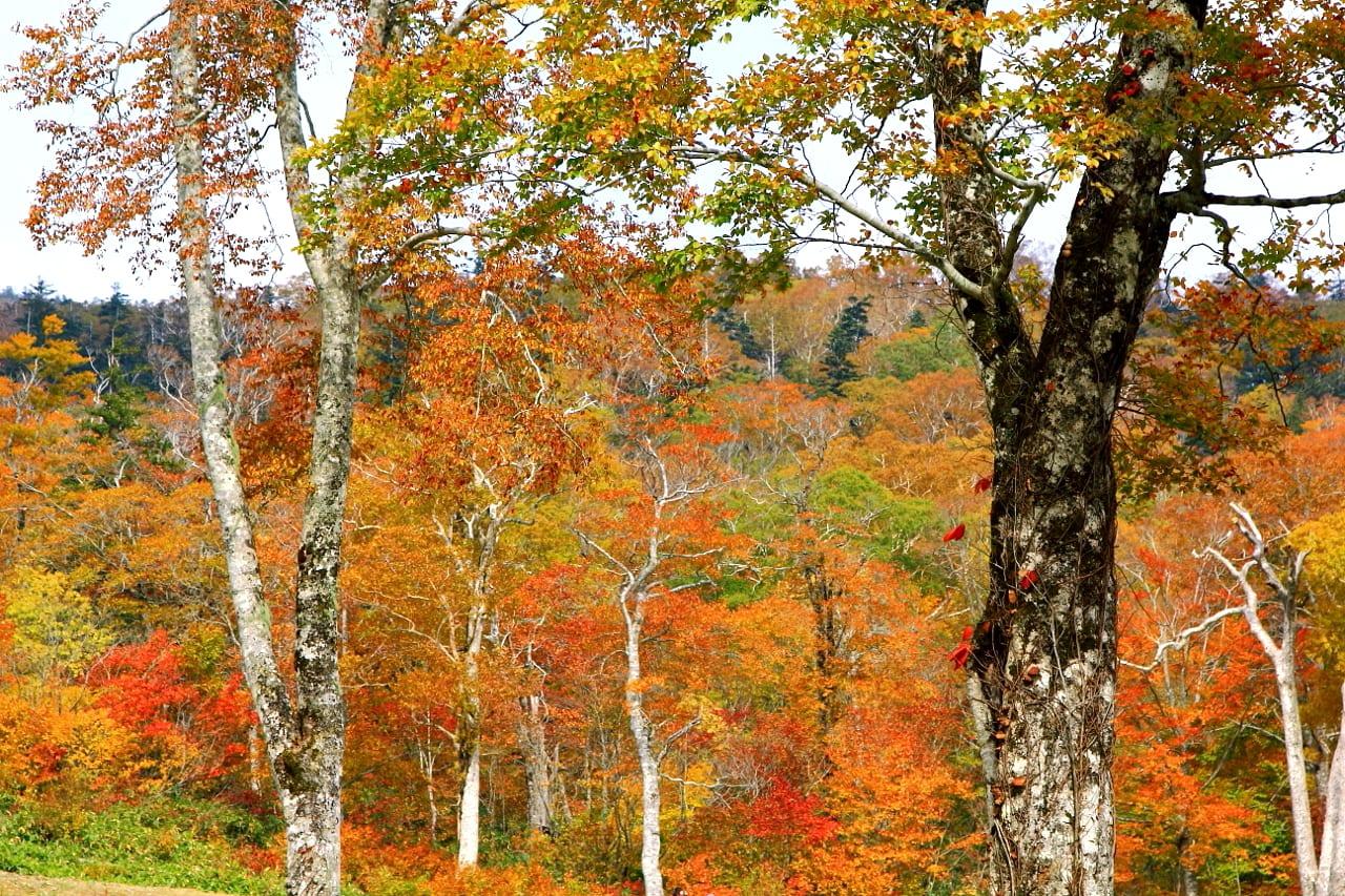 福島の四季写真