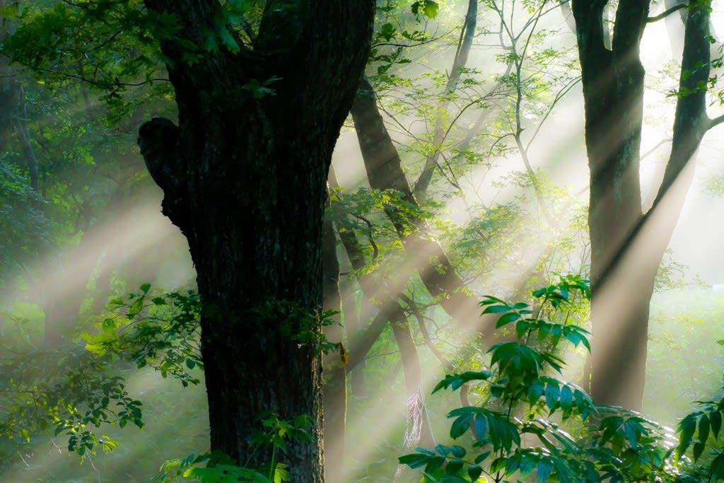 森の朝の写真