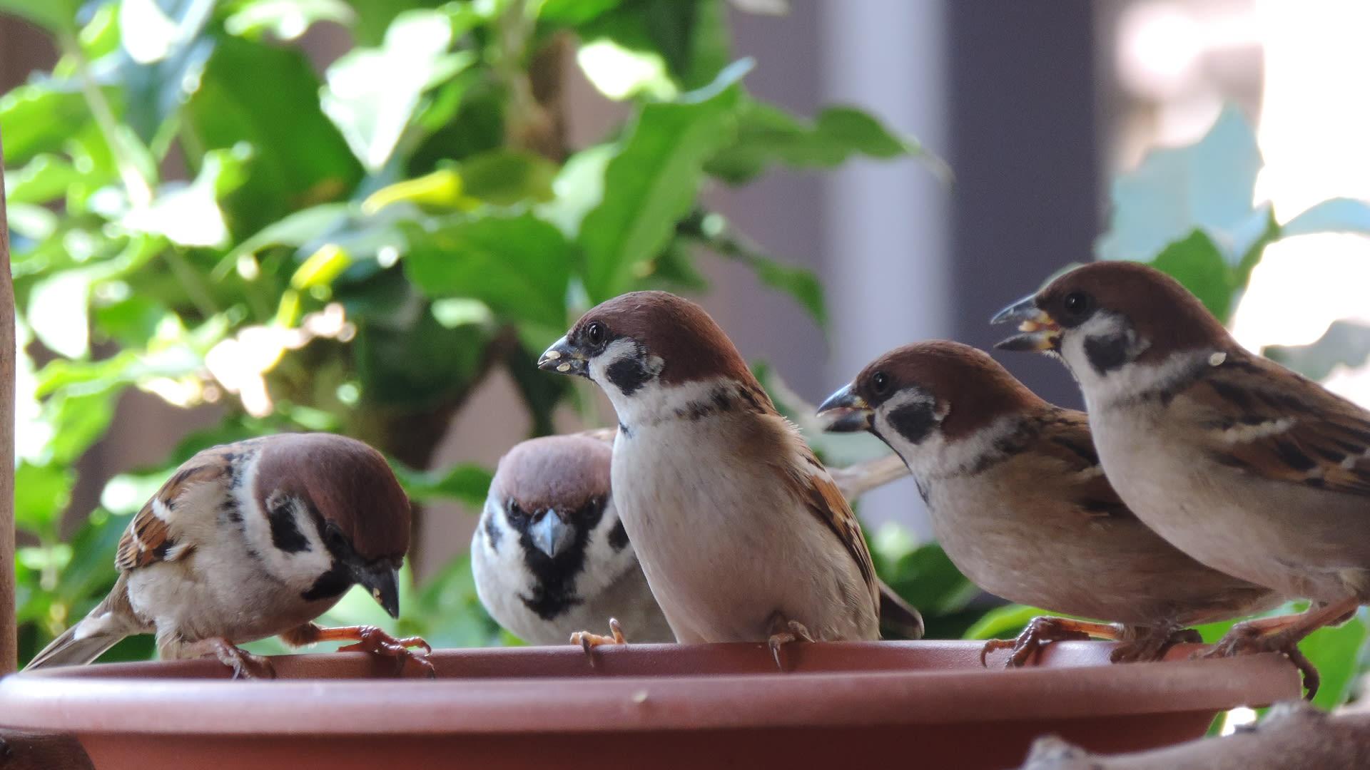 雀の団欒画像