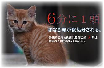 愛護 三重 県 センター 動物 センターに収容されている(犬)