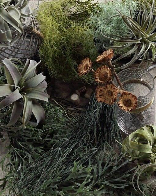 多肉植物 フェイクグリーン 造花 コーディネート画像