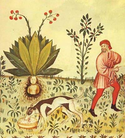 病と医術の歴史 14: 古代エジプ...