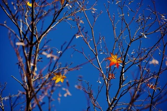もうおとなしくなった・・残った紅葉もまたいい♪
