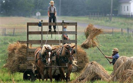 Amish2_1115783c11