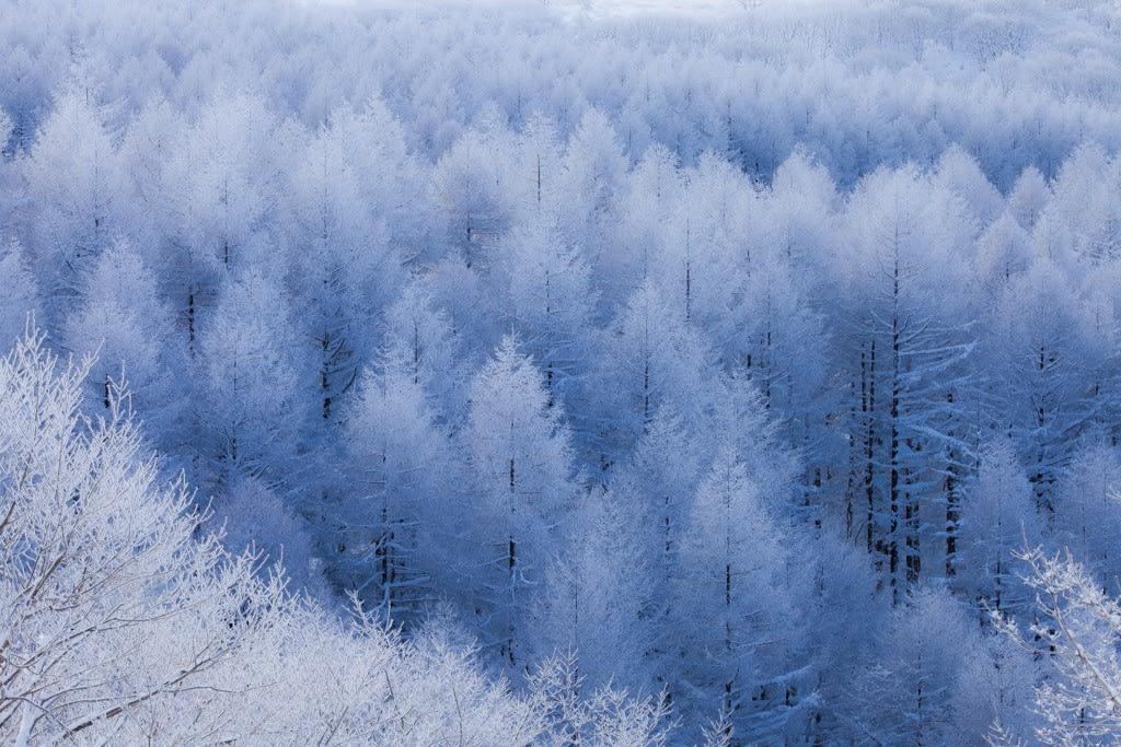 霧氷(霧ヶ峰)の写真