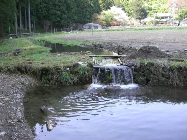 Nagarekomi