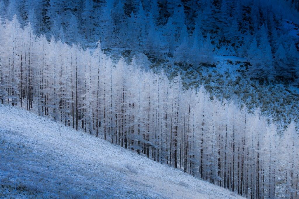 霧氷(美ヶ原)の写真