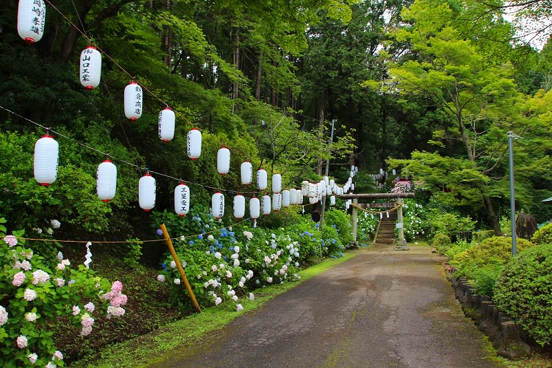 益子町 太平神社のアジサイ 26.6.26 - 栃木の木々