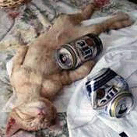「つい1杯」から女性がアルコール依存症になるわ …
