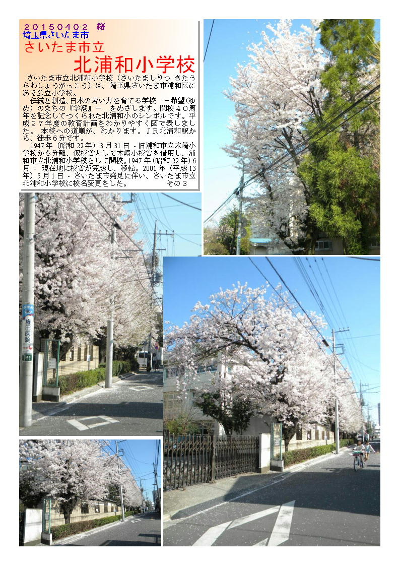 花巡り 「桜-その301」 さいた...
