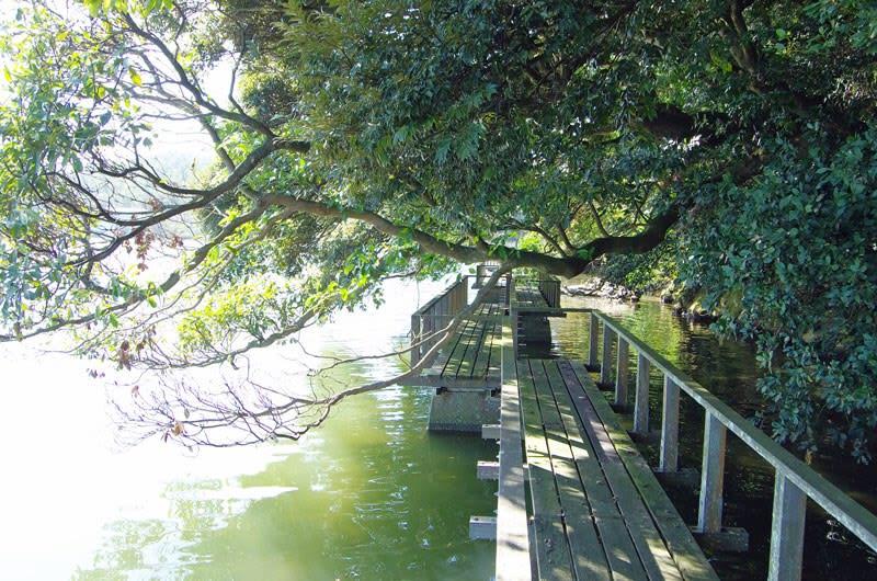 鹿島の森/水上デッキ